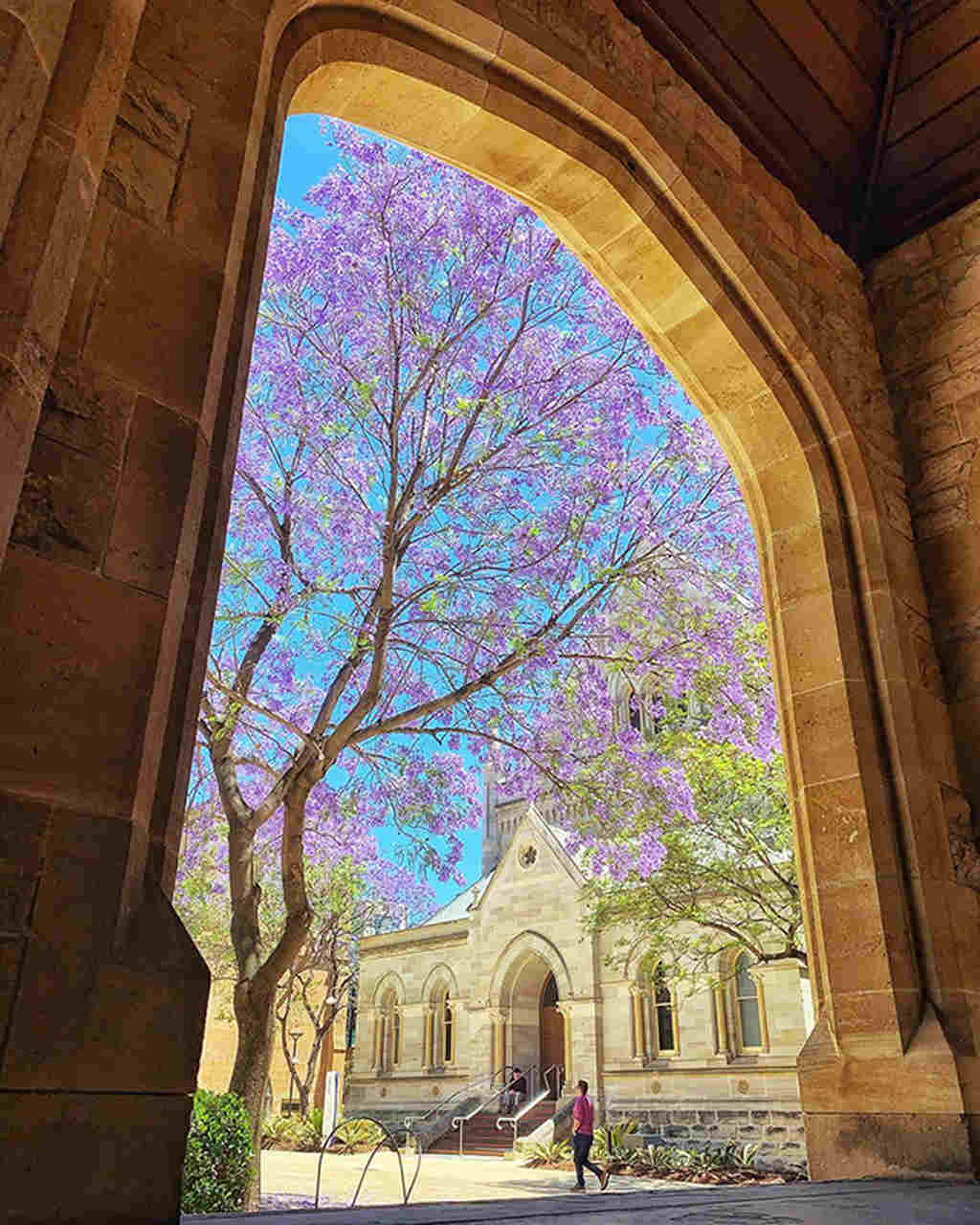 Architecture, Arch, Building, Glass, Window, Chapel, Tree, Place of worship, Medieval architecture, Stained glass